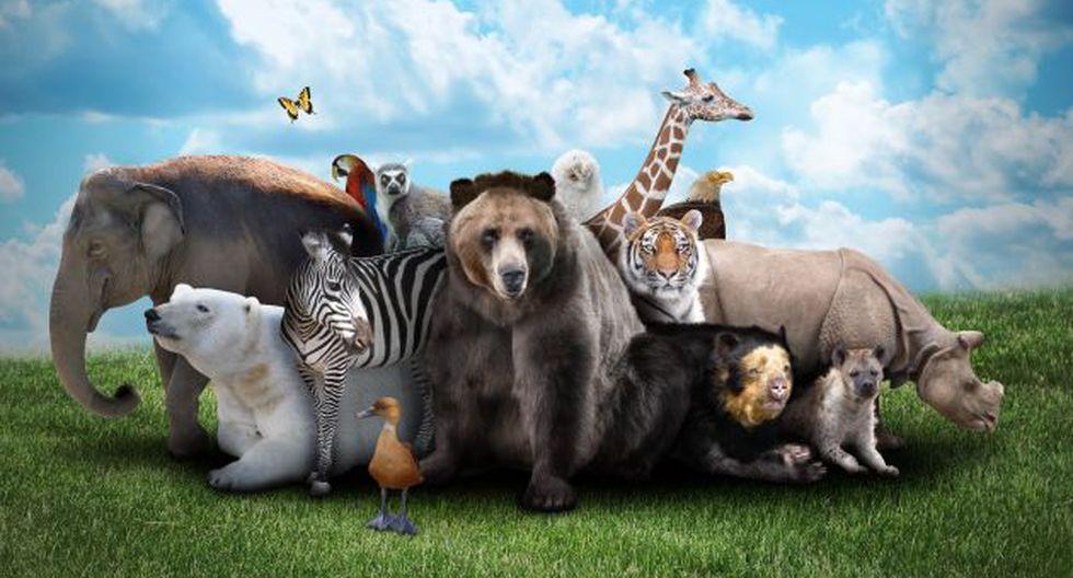 Especie en extinción (Foto referencial: Shutterstock)