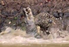 YouTube viral: Jaguar y caimán se enfrentan en un duelo a muerte en el agua | VIDEO