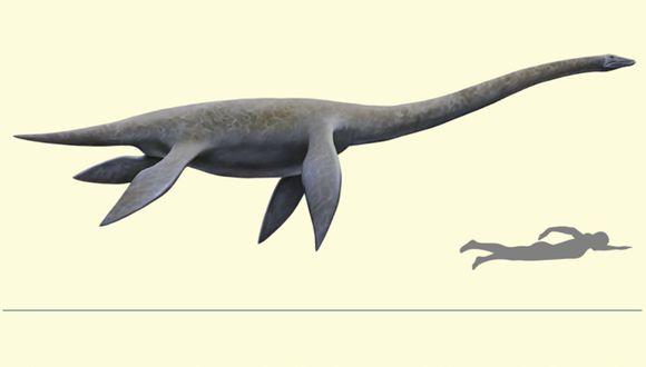 Hallan fósil de un plesiosaurio en el Morro Solar, el primero registrado en el Perú. (Foto: Agencia Andina)