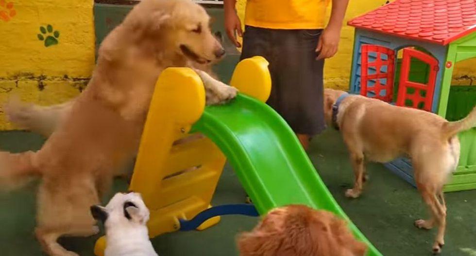 Los canes se turnaban para poder subir y bajar en el tobogán. (YouTube: ViralHog)