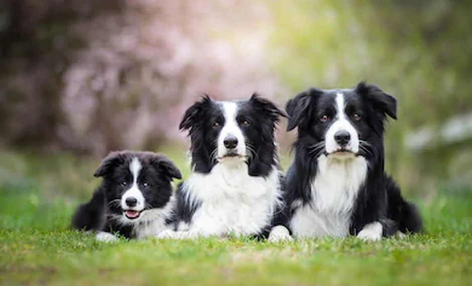 Perros inteligentes y otros no tanto. ¿Cuáles prefieres? (Shutterstock)