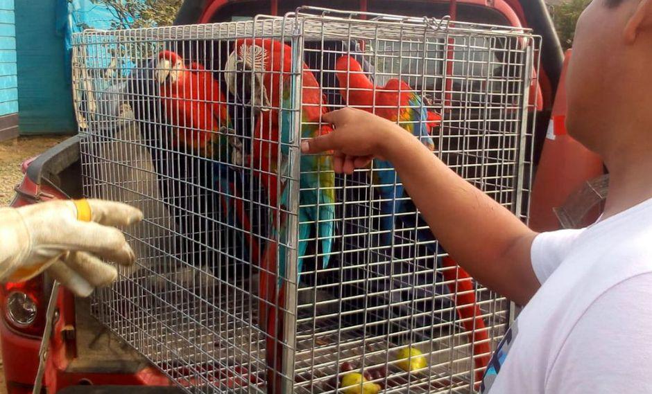 Madre de Dios: rescatan a 24 animales exóticos en operación internacional de fauna silvestre | FOTOS
