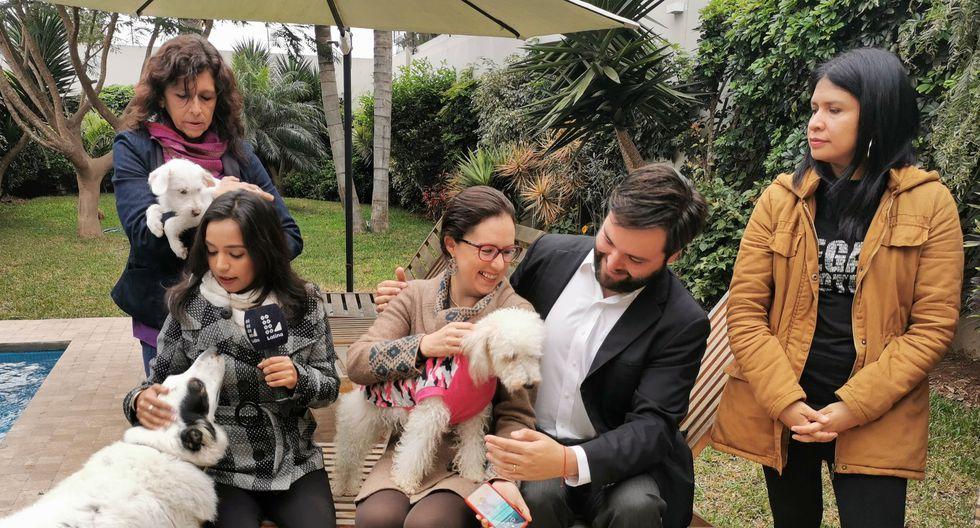 Presentarán proyecto que propone esterilización de perros y gatos como política de salud pública. (Foto: @MarisaGlave)