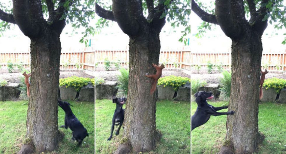 La ardilla se movió rápidamente por el tronco para no ser alcanzada. (YouTube: ViralHog)