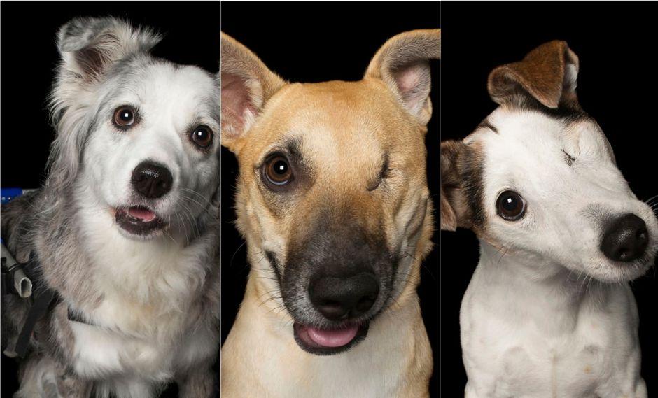 Fotógrafa australiana realizó retratos a perros con discapacidad | FOTOS